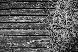 dirty wooden deck black and white
