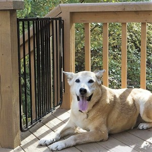smiling dog with wooden railings and aluminum gate on wooden deck